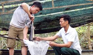 Trang trại cá hồi thu hơn 2 tỷ đồng mỗi năm ở Thanh Hóa