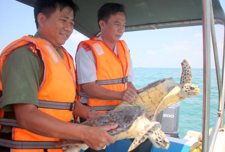 Hai con đồi mồi lúcchuẩn bị được thả xuống biển. Ảnh: Nguyễn Khoa.