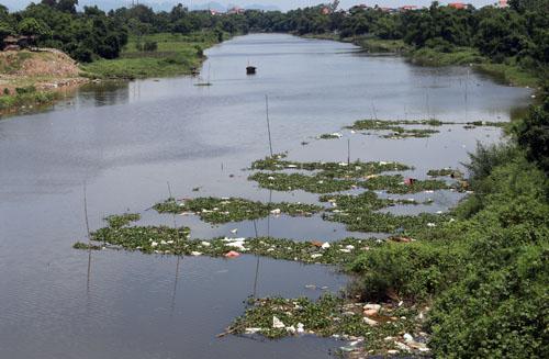 Sông Đáy, đoạn qua thị trấn Vân Đình xuất hiện nhiều xác lợn chết bốc mùi hôi thối. Ảnh: Tất Định