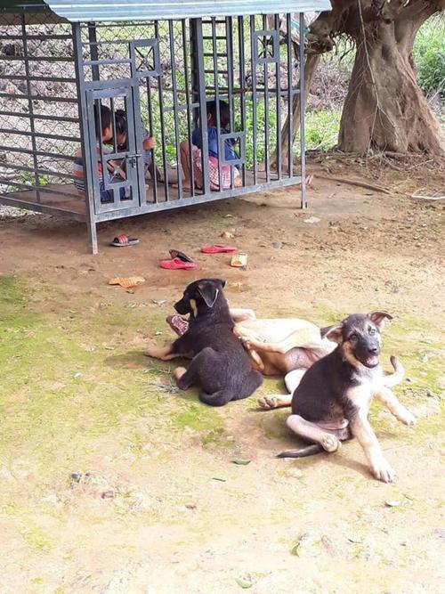 Ba cún cưng cũng phải ra đường vì bị chiếm nhà.