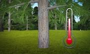 Biến đổi khí hậu khiến cây ở Trung Quốc mọc nhanh hơn