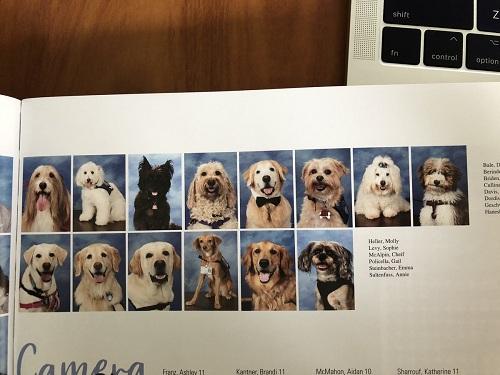 Trang niên giám in ảnh 14 chú chó trị liệu. Ảnh: Twitter