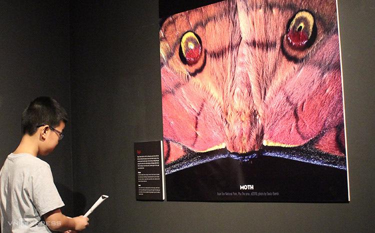 Bạn Đoàn Gia Hưng ngắm nhìn bức ảnh con ngài tại triển lãm. Ảnh: Phan Minh.