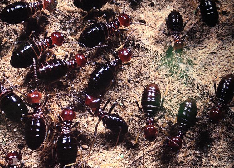 Hà Nội mở triển lãm ảnh đa dạng côn trùng