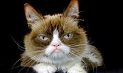 'Cô mèo cau có' nổi tiếng mạng xã hội qua đời
