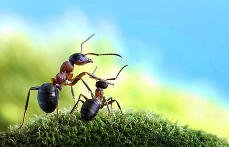 Có phải loài kiến không nằm ngủ bao giờ?