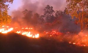Hơn 15 ha rừng phòng hộ ở Quảng Bình cháy suốt 10 tiếng