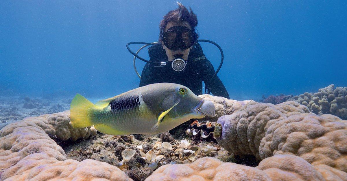 Loài cá mượn san hô để tách vỏ trai