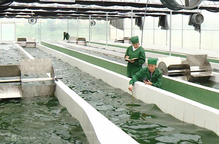 Khu nuôi trồng tảo xoắn Spirulina VNU A03tạiViện nghiên cứu và ứng dụng công nghệ cao Hòa Lạc.