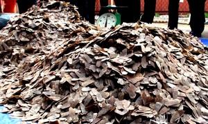 Hải quan thu giữ 5 tấn vảy tê tê nhập từ châu Phi về Việt Nam