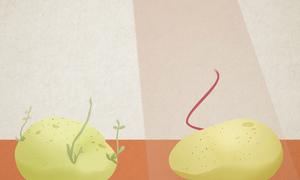 Chiếu xạ kéo dài tuổi thọ cho thực phẩm tại Cuba