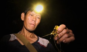Tay không bắt cá dưới suối lúc nửa đêm ở Thanh Hóa