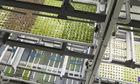 Nông dân công nghệ trong nông trại xếp tầng