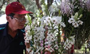 Gần 800 cây hoa lan được trưng bày ở Nha Trang