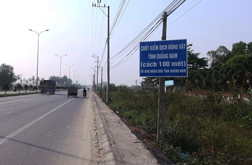 Chốt kiểm dịch được tỉnh Quảng Nam đặt trên quốc lộ 1A đoạn qua thị xã Điện Bàn. Ảnh: Đắc Thành.