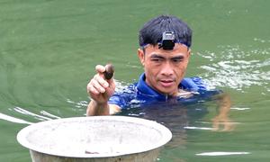 Lặn sâu 3 mét dưới sông để mò bắt trai ở Thanh Hóa