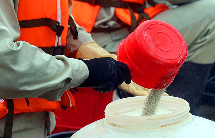 Chế phẩm Redoxy-3C dạng bột, dễ hoà tan trong nước. Ảnh: Bá Đô.