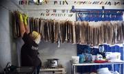 Nỗ lực biến loài tảo xâm lấn thành sản phẩm hữu ích ở Mexico