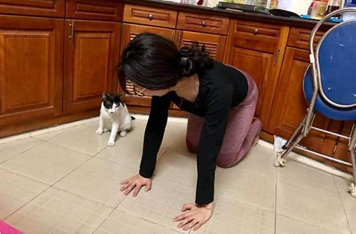 Mèo tập yoga cùng cô chủ - 4