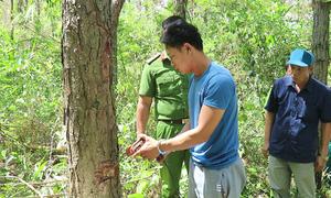 Thực nghiệm hiện trường vụ phá hơn 10 ha rừng thông ở Lâm Đồng