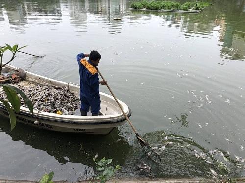 Cá chết ở Văn Chương sau mưa lớn