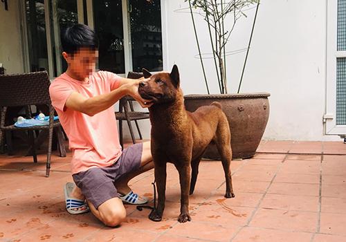 Chó được chủ hóa đầu ngựa