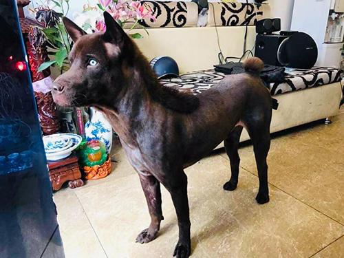 Chó được chủ hóa đầu ngựa - 1