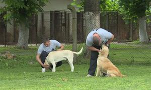 Trại giam Serbia cho phạm nhân huấn luyện chó hoang
