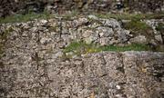 Thử tài phát hiện cú mèo ẩn mình trên tường đá