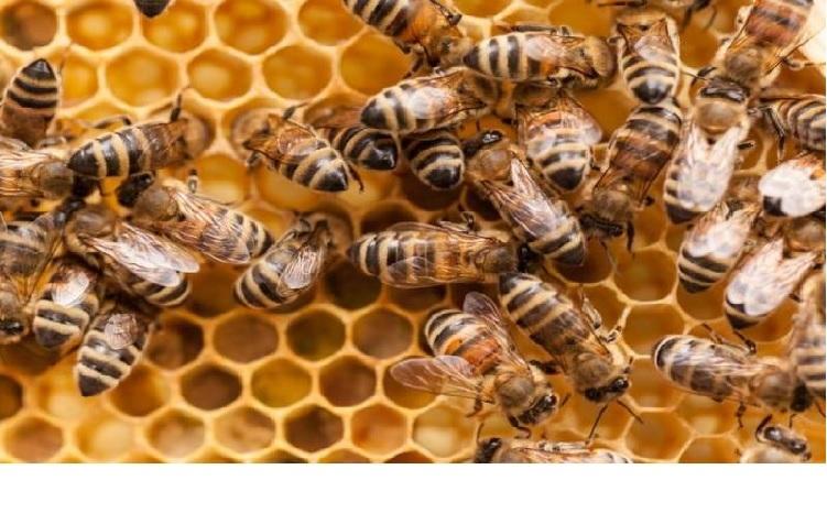 Ong có khả năng xử lý các con số thông qua ký hiệu hình ảnh