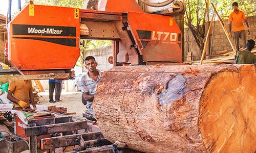 Thợ mộc ở Sri Lanka sẽ phải tìm công việc thay thế trong 5 năm tới. Ảnh: Daily Sun.
