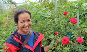 Vườn hoa hồng gần 500 giống nhập ngoại ở Đà Lạt