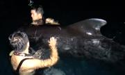 Cá voi dài 3 m mắc cạn ở bờ biển Trung Quốc