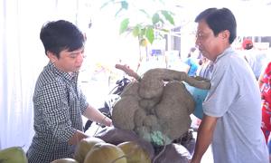 Củ bình vôi 41 kg được gia đình ở Cần Thơ gìn giữ qua ba đời