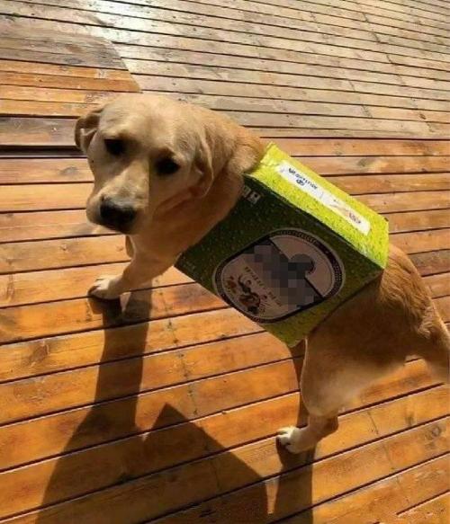 Đưa tiền nhờ chồng mua đồ cho cún cưng, bà vợ choáng khi thấy kết quả  - 1