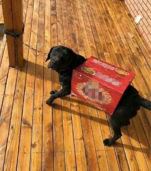 Đưa tiền nhờ chồng mua đồ cho cún cưng, bà vợ choáng khi thấy kết quả  - 2