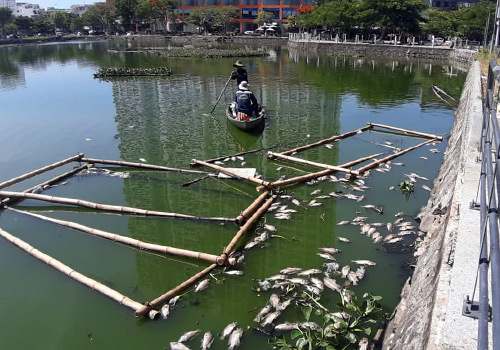 Công nhân thu gom cá chết để giảm mùi hôi đến khu dân cư xung quanh. Ảnh: N.T.