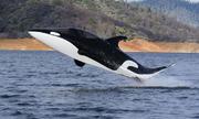 Tàu ngầm lao lên mặt nước, xoay vòng như cá voi