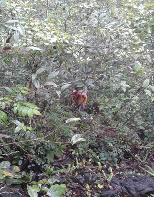 Nhóm nghiên cứu thu mẫu cây thìa là hóa gỗ. Ảnh: VAST.