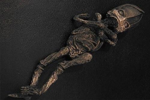 Sinh vật được phát hiện ở Kyshtym năm 1996. Ảnh: Varnautre.