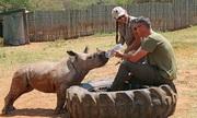 Tê giác non bị thợ săn trộm chém nhiều nhát khi bảo vệ mẹ