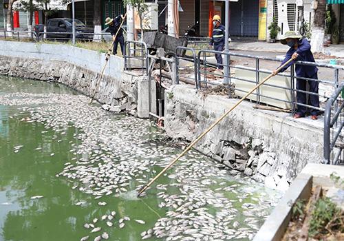 Công nhân thu gom cá chết tại hồ Vĩnh Trung sáng 17/6. Ảnh: Nguyễn Đông.