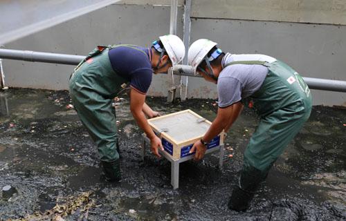 Công nhân đặt tấm vật liệu Bioreactor tại khu vực xử lý phân hủy bùn. Ảnh: Tất Định