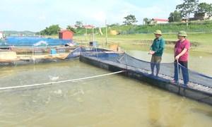 Nuôi cá lồng trên sông Thái Bình thu 1,5 tỷ đồng mỗi năm