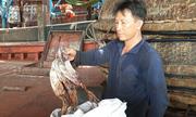 600 tấn mực khô ở Quảng Nam nằm bờ không có người mua