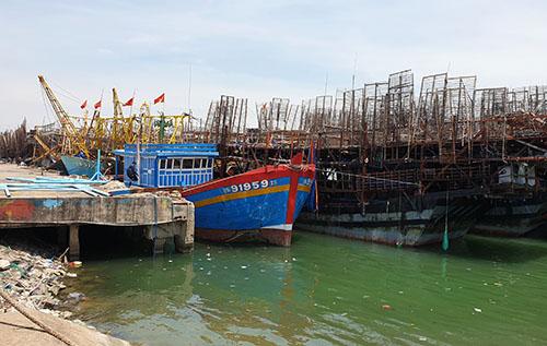 Hàng trăm tấn mực khô ở Quảng Nam chờ