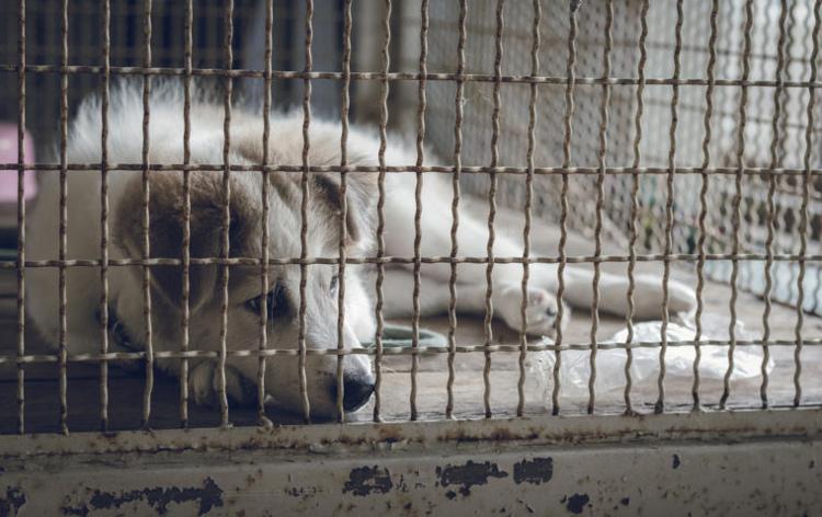 Bỏ bê động vật cũng được coi là một dạng ngược đãi tại Mỹ.