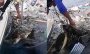 Ngư dân cứu cặp rùa biển kẹt trong bãi rác nổi ở Thái Lan