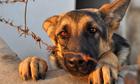 Lý do pháp luật Mỹ phạt nặng hành vi ngược đãi động vật