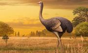 Loài chim thời tiền sử nặng nửa tấn và cao 3,5 m